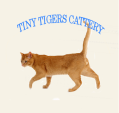 link to tiny tigers cattery